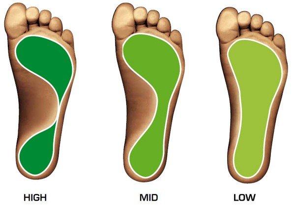 morphologie pied